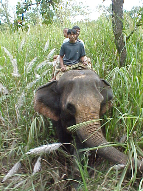 Chasing Rhinos on Elephants