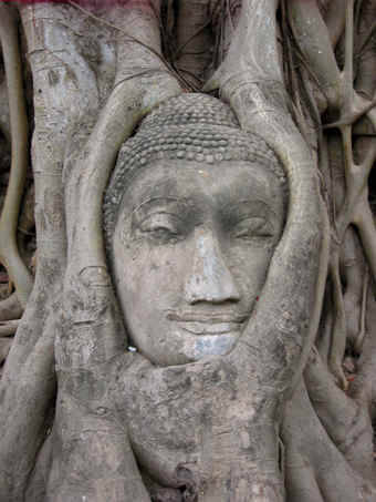 Another Buddha head cradled in Bodi tree roots, Thailand