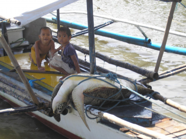 Philippines Turtle