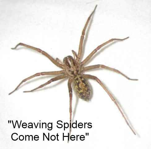 Weaving Spiders Come Not Here