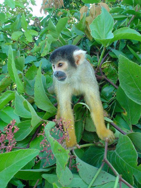 Monkey on Our Backs