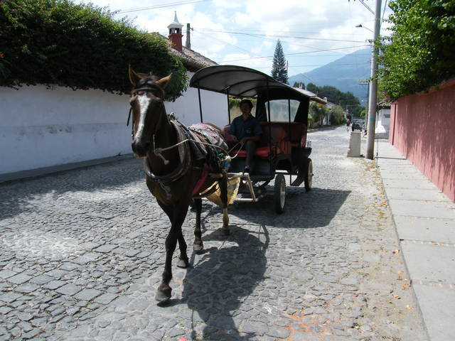 Animal Powered Carriage is how to tour the local scenery
