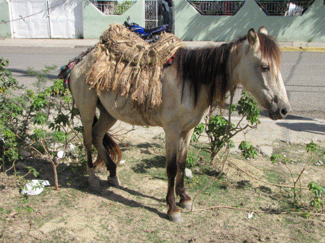 domestication of the horse will allow you to leave your horse untied.