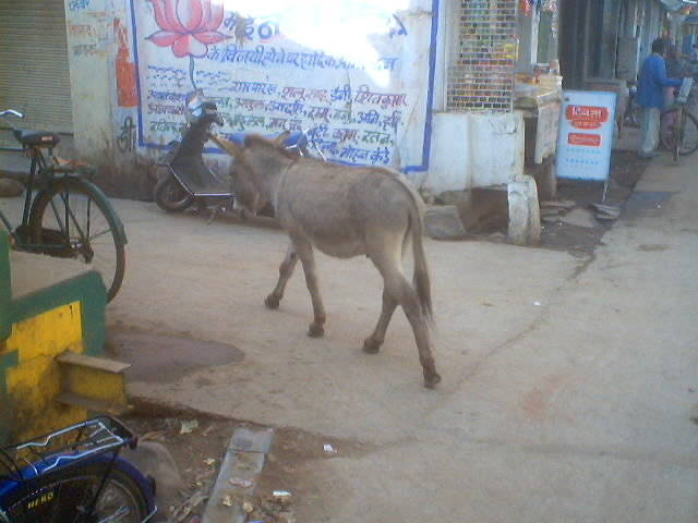 Donkey moving around freely