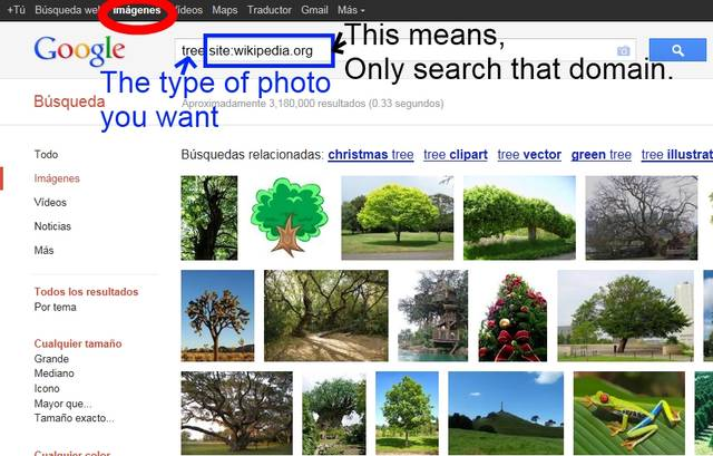 Search for Wiki Photos